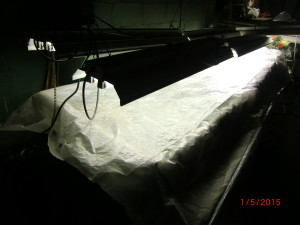 "Bed covered with plastic. The plastic is translucent not white as it appears in picture.  Lights are 15"" above the cuttings."